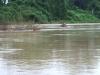 nijlpaarden-wechiau